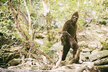 American Culture and History - The Discovery of Bigfoot
